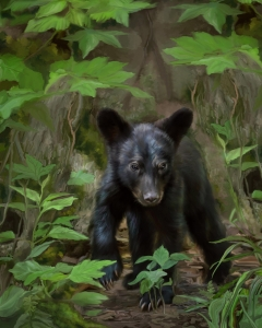 Bear by Jim Byron